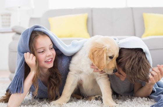 Socialisation : le chiot chez vous, avec les autres animaux et avec les enfants